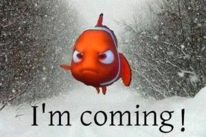 Nemo found us.